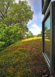 Green Roofs Also Known As Eco Roofs Vegetated Roofs And