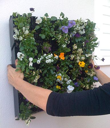 Diy Living Wall living walls - vertical gardens - living roofs - vertical
