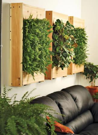 Plants And LED Grow Lights